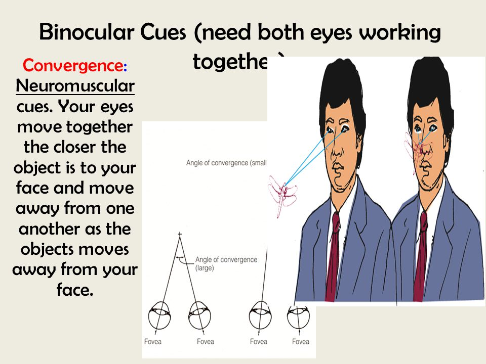 Binocular Cues (need both eyes working together)