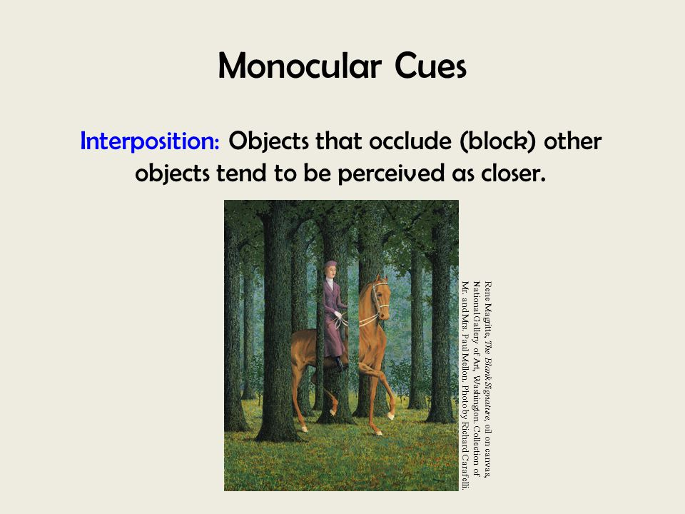 Monocular Cues Interposition: Objects that occlude (block) other objects tend to be perceived as closer.