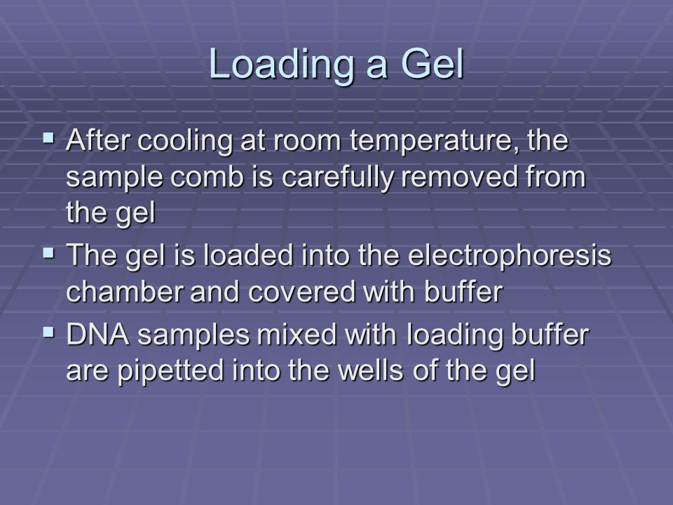 Loading a Gel After cooling at room temperature, the sample comb is carefully removed from the gel.