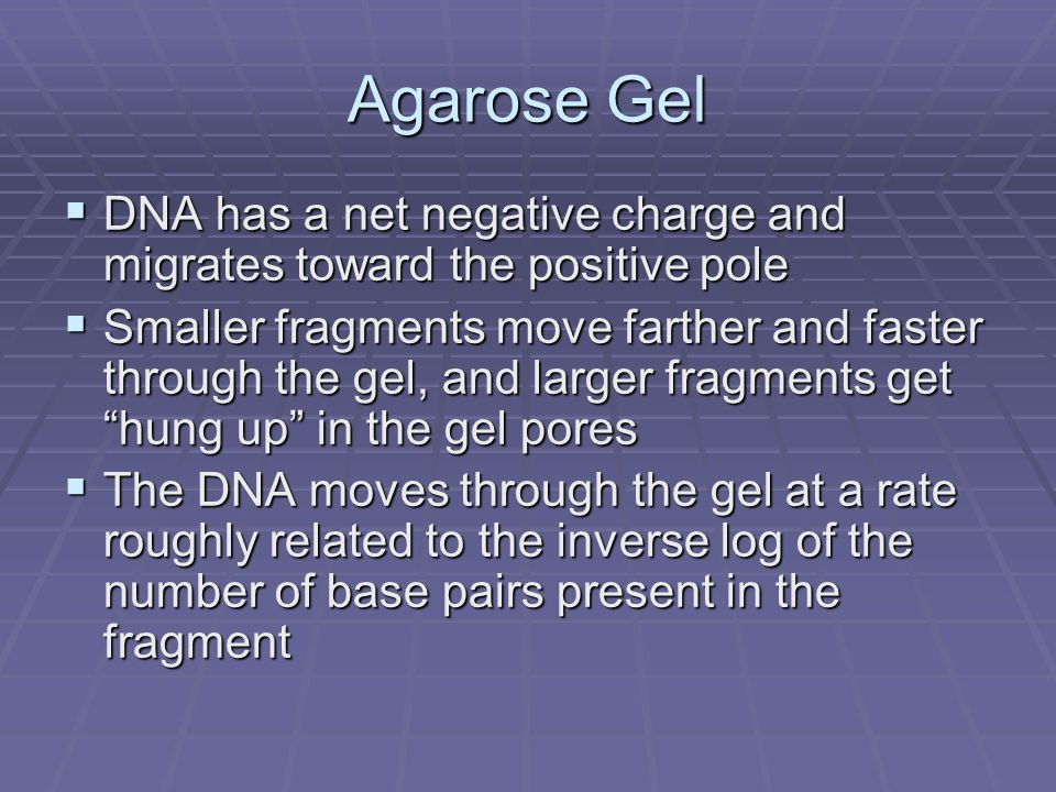 Agarose Gel DNA has a net negative charge and migrates toward the positive pole.