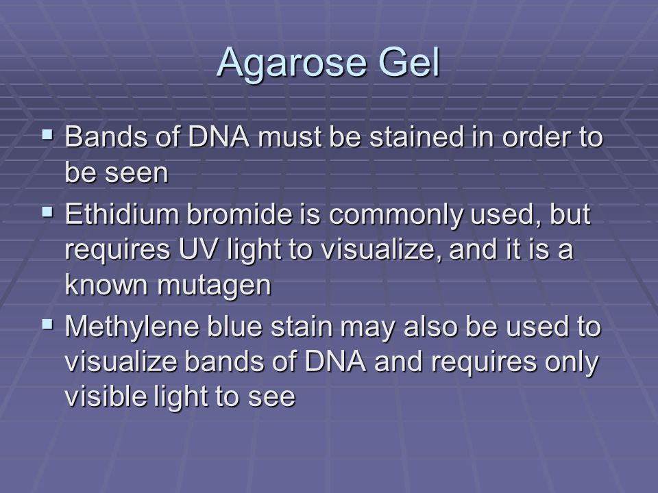 Agarose Gel Bands of DNA must be stained in order to be seen