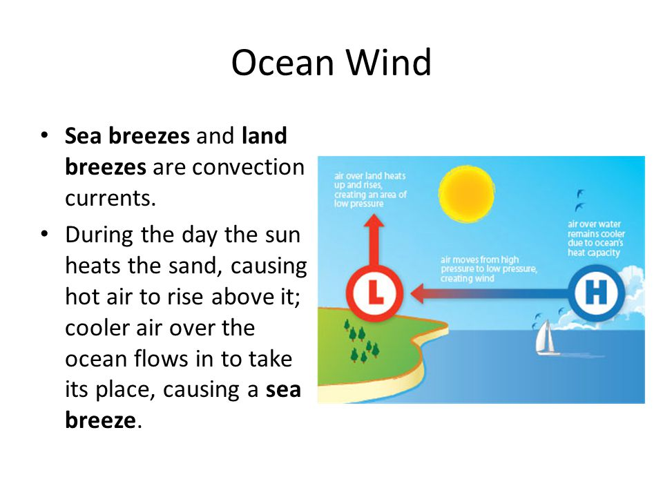 Ocean Wind Sea breezes and land breezes are convection currents.
