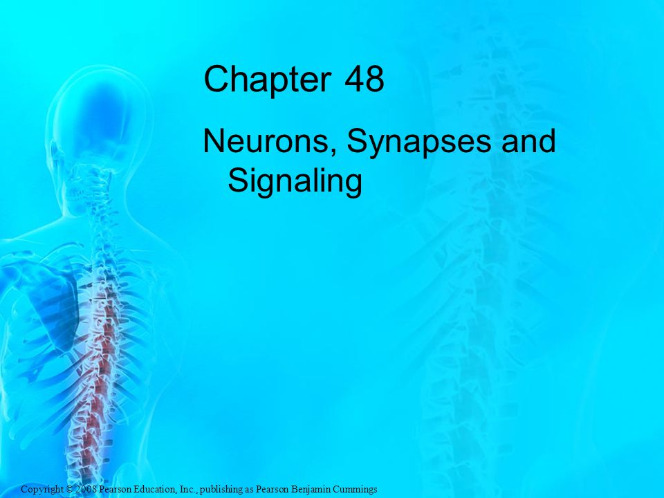Chapter 48 Neurons, Synapses and Signaling