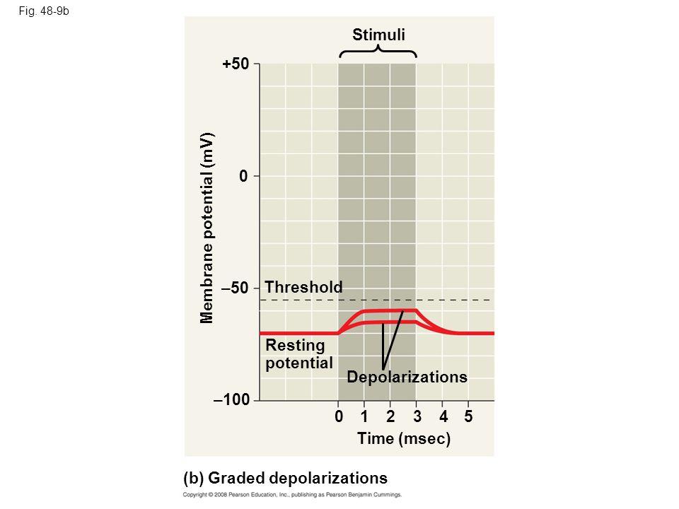 Membrane potential (mV)