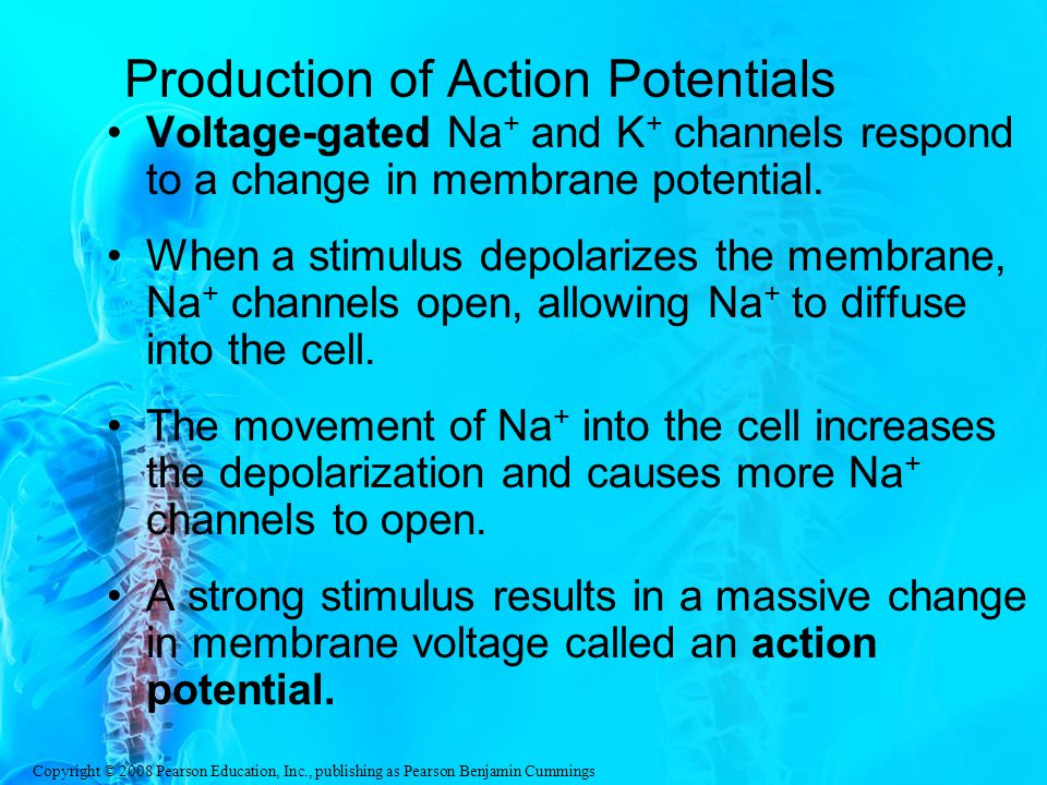 Production of Action Potentials