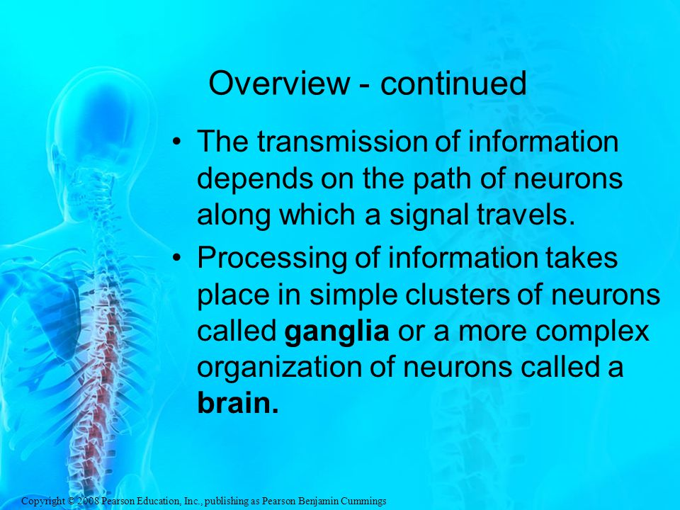 Overview - continued The transmission of information depends on the path of neurons along which a signal travels.