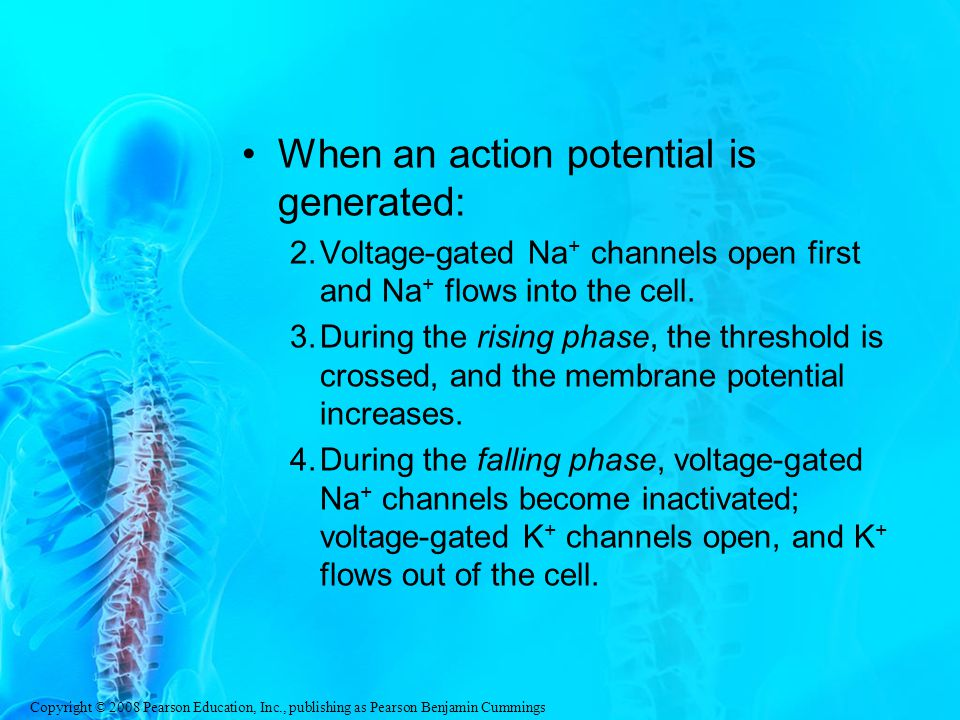 When an action potential is generated: