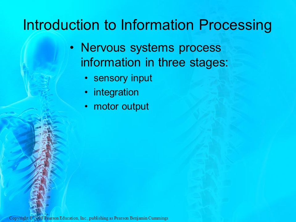 Introduction to Information Processing