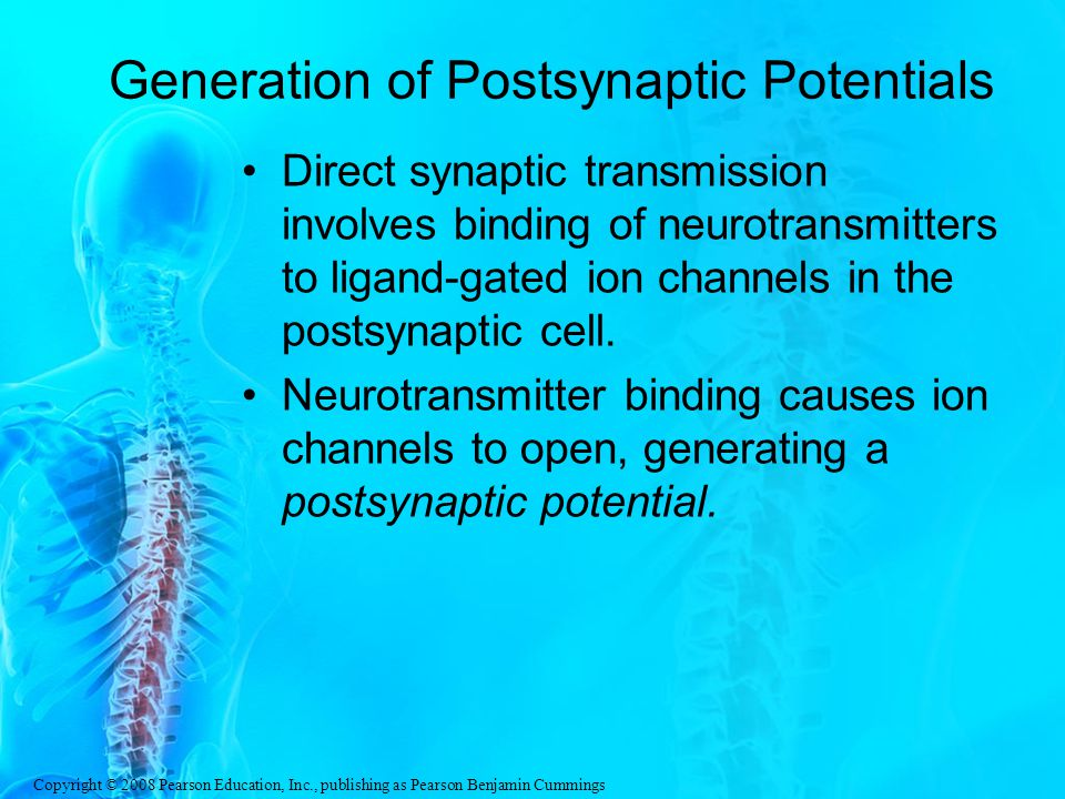 Generation of Postsynaptic Potentials