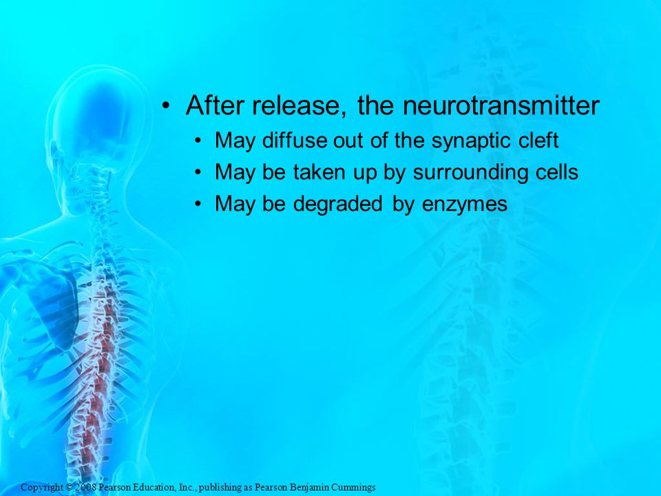 After release, the neurotransmitter