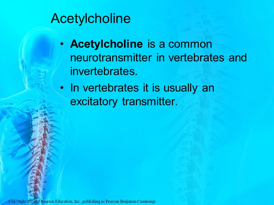 Acetylcholine Acetylcholine is a common neurotransmitter in vertebrates and invertebrates.
