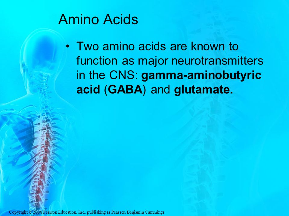 Amino Acids Two amino acids are known to function as major neurotransmitters in the CNS: gamma-aminobutyric acid (GABA) and glutamate.