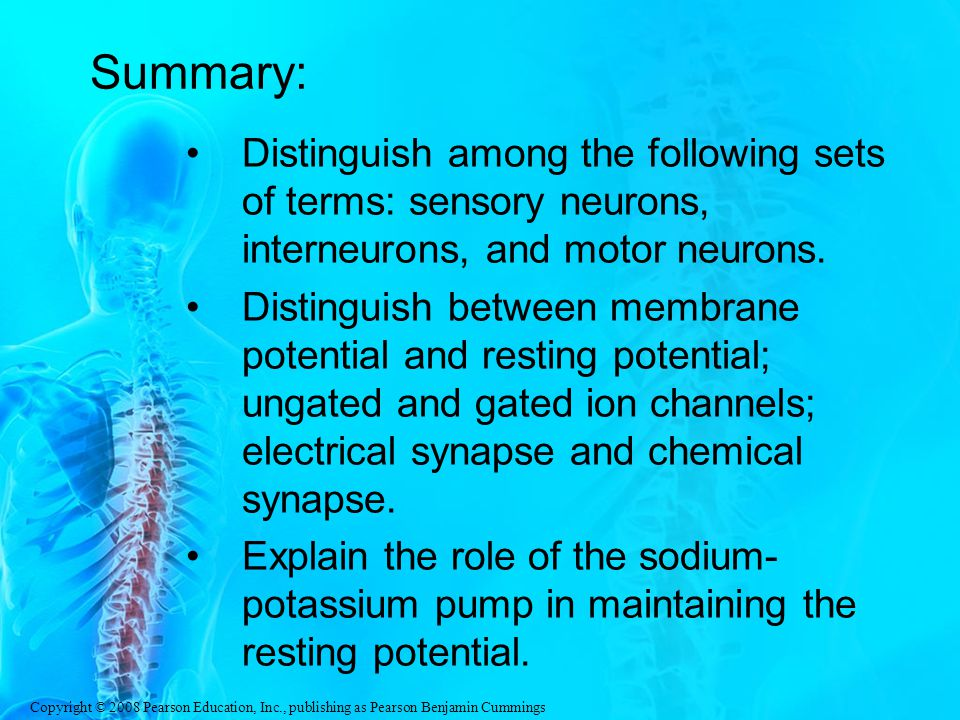 Summary: Distinguish among the following sets of terms: sensory neurons, interneurons, and motor neurons.