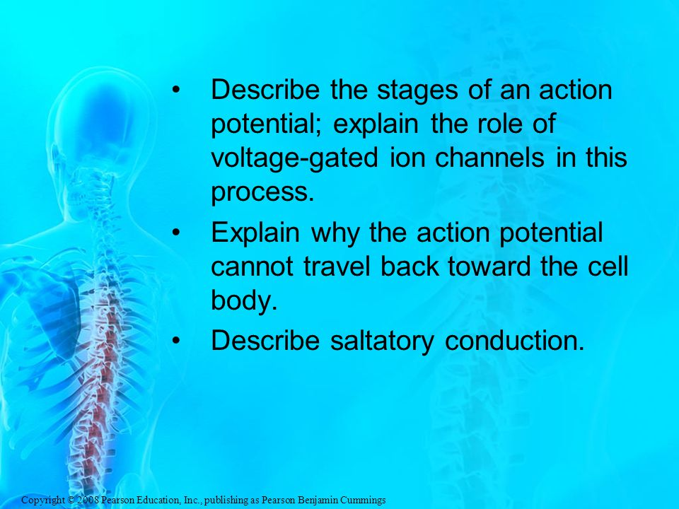 Describe the stages of an action potential; explain the role of voltage-gated ion channels in this process.
