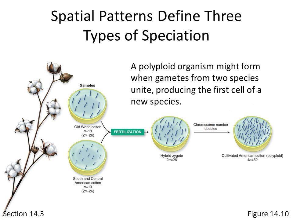 Spatial Patterns Define Three Types of Speciation