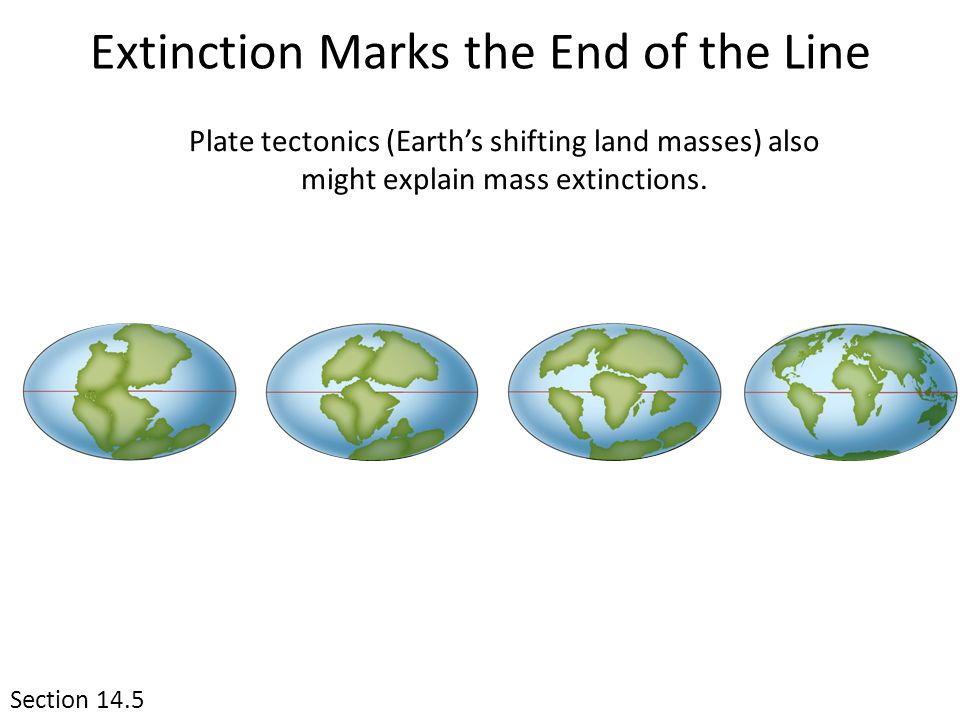 Extinction Marks the End of the Line