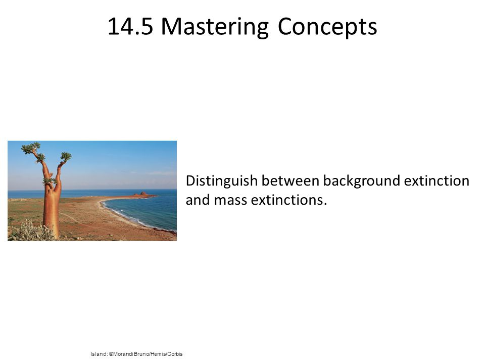 14.5 Mastering Concepts Distinguish between background extinction and mass extinctions.