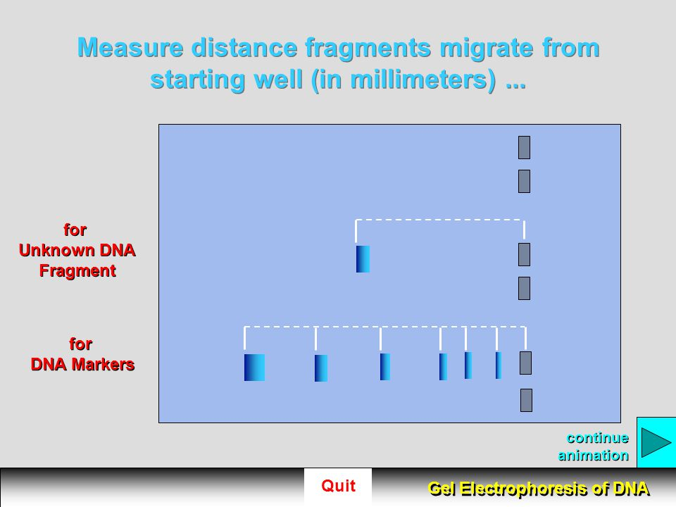 Measure distance fragments migrate from starting well (in millimeters) ...