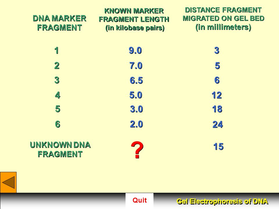 KNOWN MARKER FRAGMENT LENGTH (in kilobase pairs)