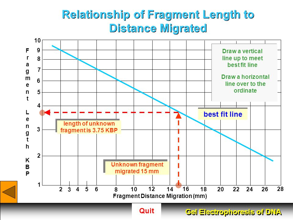 Relationship of Fragment Length to Distance Migrated