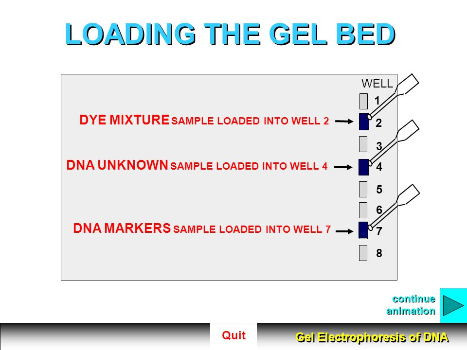 LOADING THE GEL BED DYE MIXTURE SAMPLE LOADED INTO WELL 2