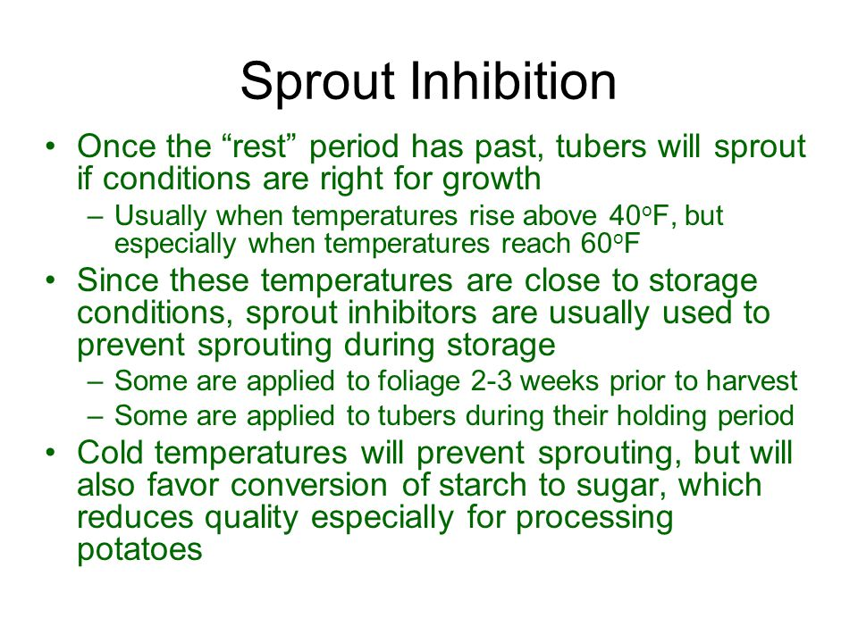 Sprout Inhibition Once the rest period has past, tubers will sprout if conditions are right for growth.