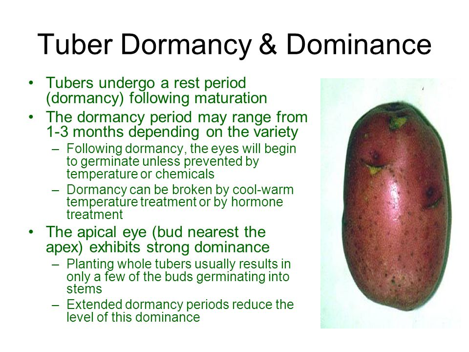 Tuber Dormancy & Dominance