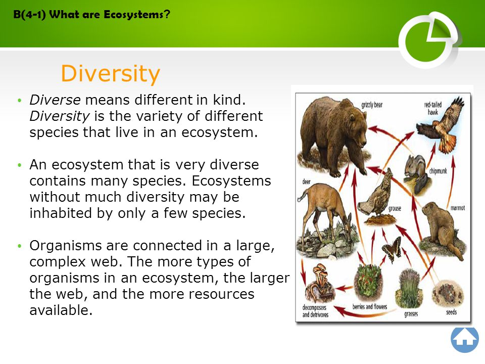 save species and ecosystem essay Learn about endangered species in your area 10 easy things you can do to save endangered species 1 learn about endangered species in your area.