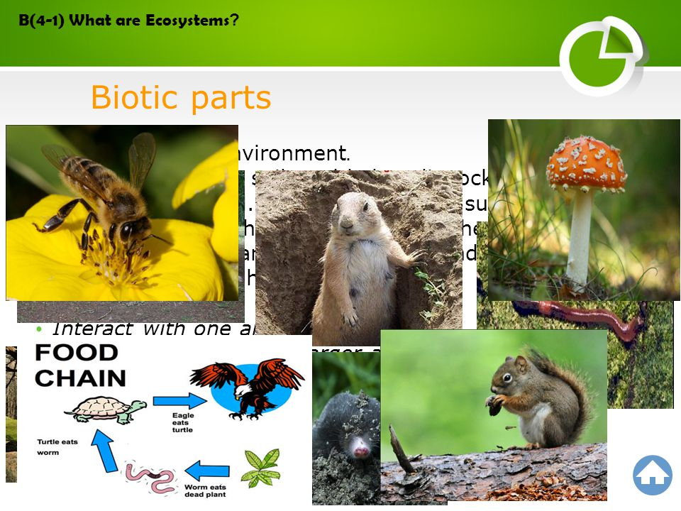 Biotic parts Help shape the environment.