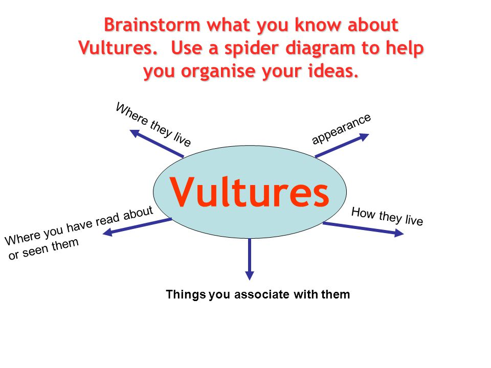 Brainstorm what you know about Vultures