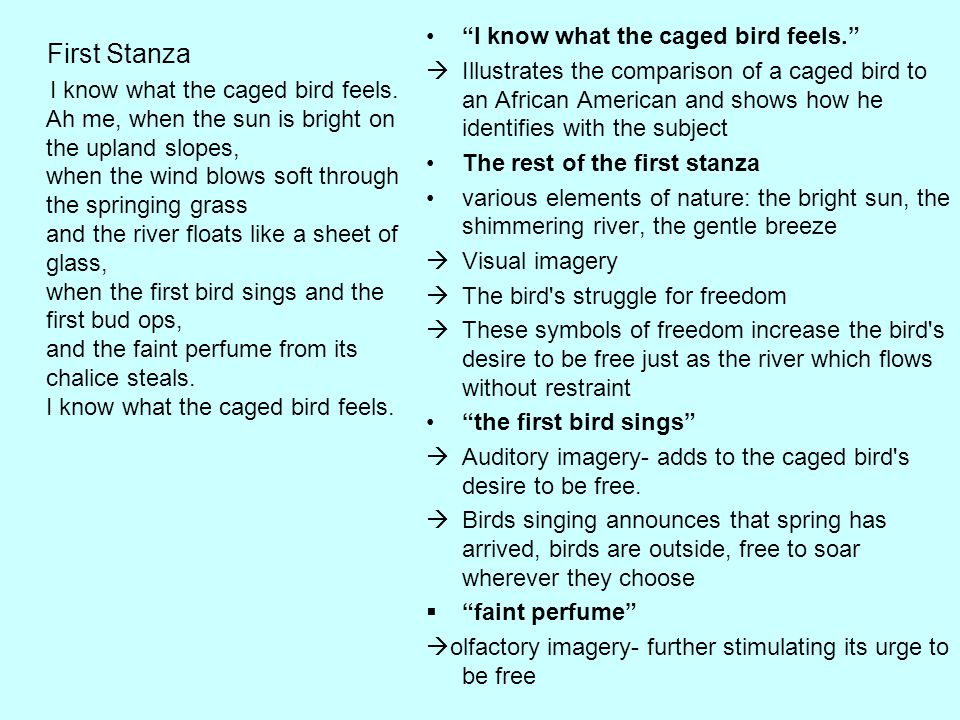 First Stanza I know what the caged bird feels.