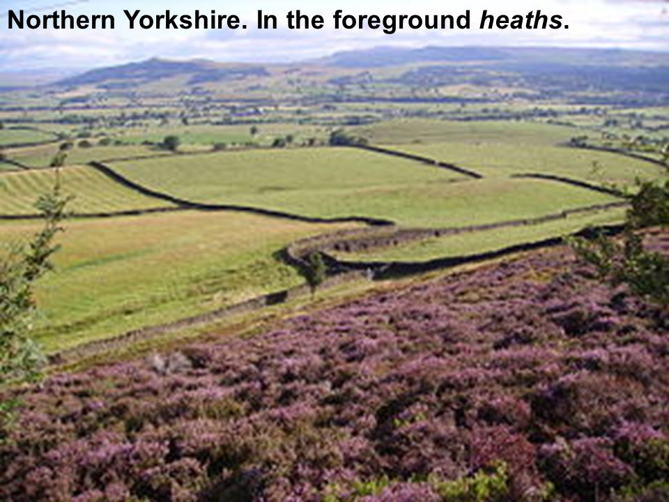 Northern Yorkshire. In the foreground heaths.
