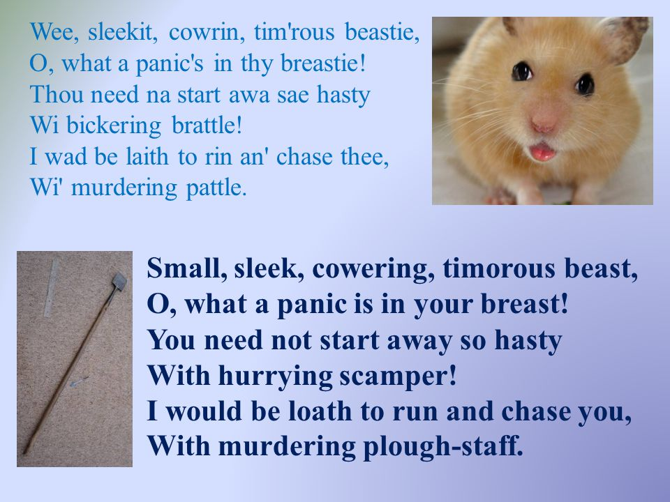 Wee, sleekit, cowrin, tim rous beastie, O, what a panic s in thy breastie! Thou need na start awa sae hasty Wi bickering brattle! I wad be laith to rin an chase thee, Wi murdering pattle.