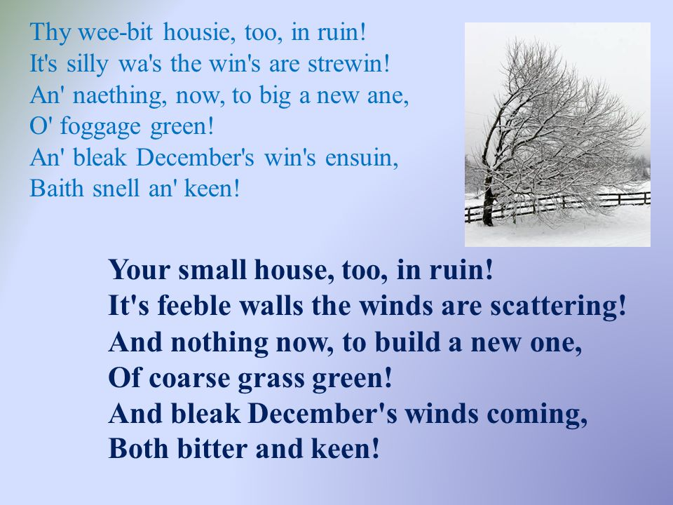 Thy wee-bit housie, too, in ruin! It s silly wa s the win s are strewin! An naething, now, to big a new ane, O foggage green! An bleak December s win s ensuin, Baith snell an keen!