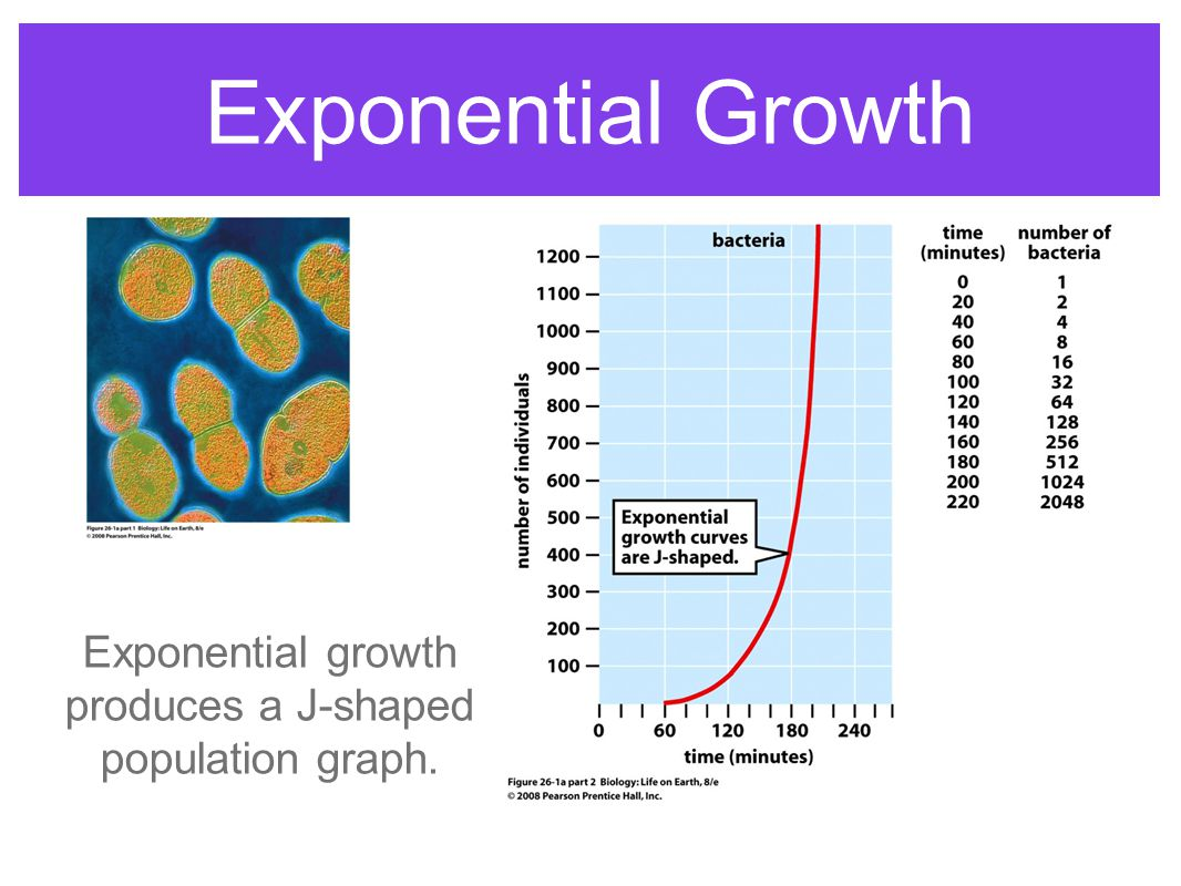 Exponential growth produces a J-shaped population graph.