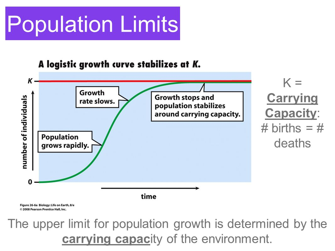Population Limits K = Carrying Capacity: # births = # deaths