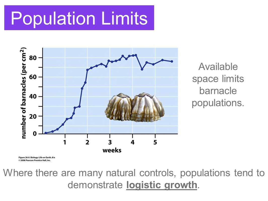 Available space limits barnacle populations.