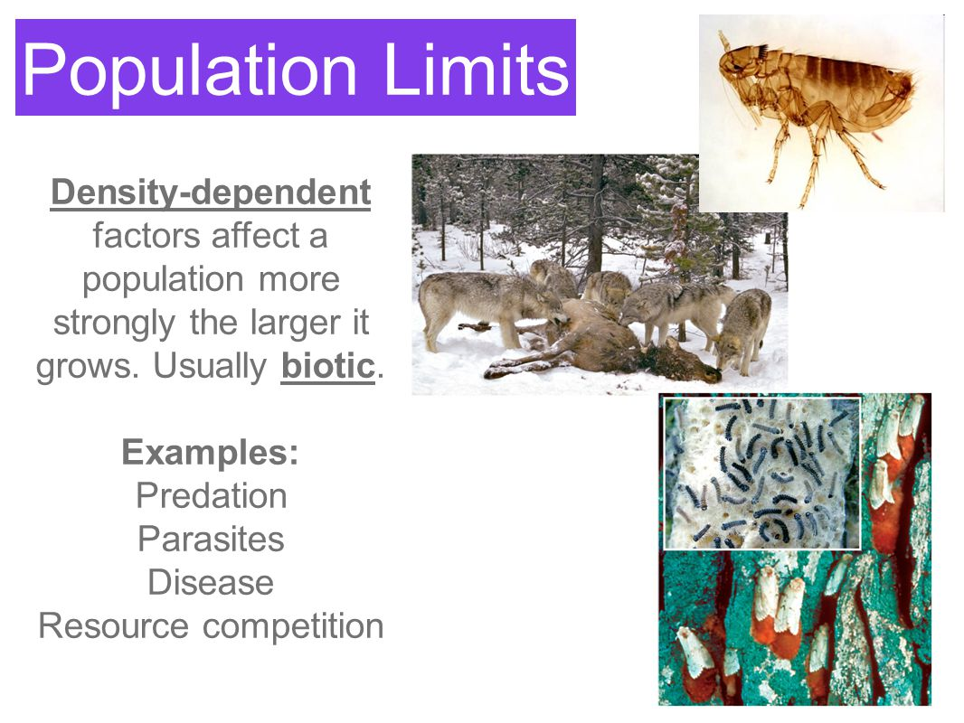 Population Limits Density-dependent factors affect a population more strongly the larger it grows. Usually biotic.