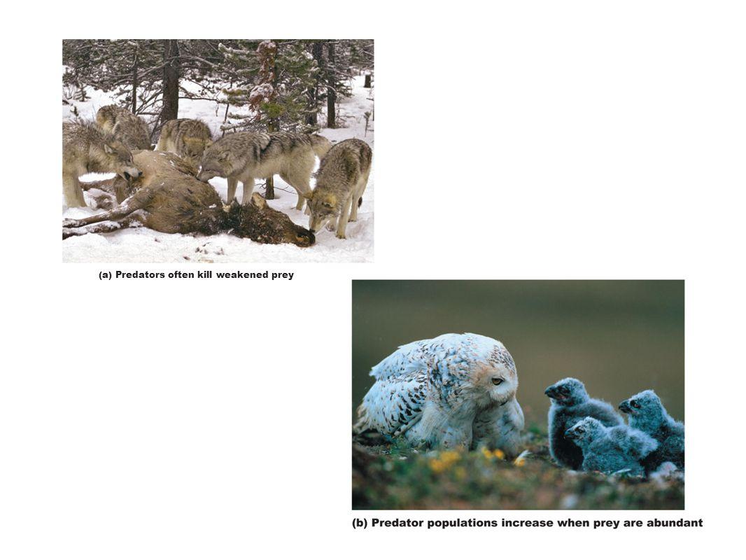 (a) Predators often kill weakened prey