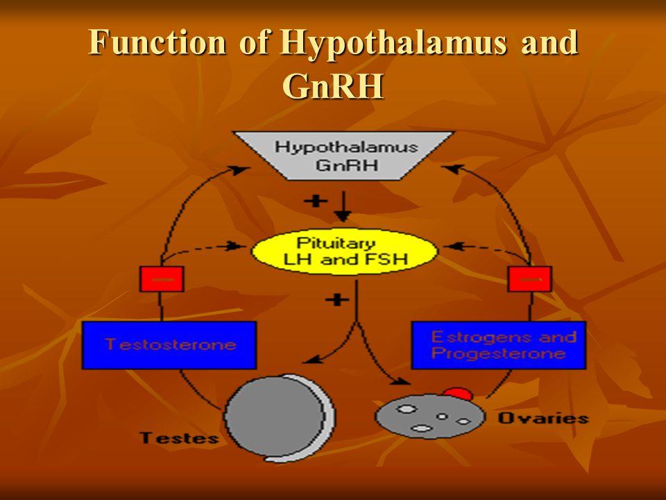 Function of Hypothalamus and GnRH