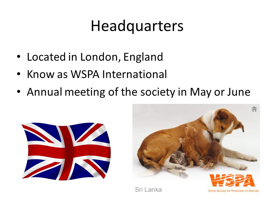 Headquarters Located in London, England Know as WSPA International