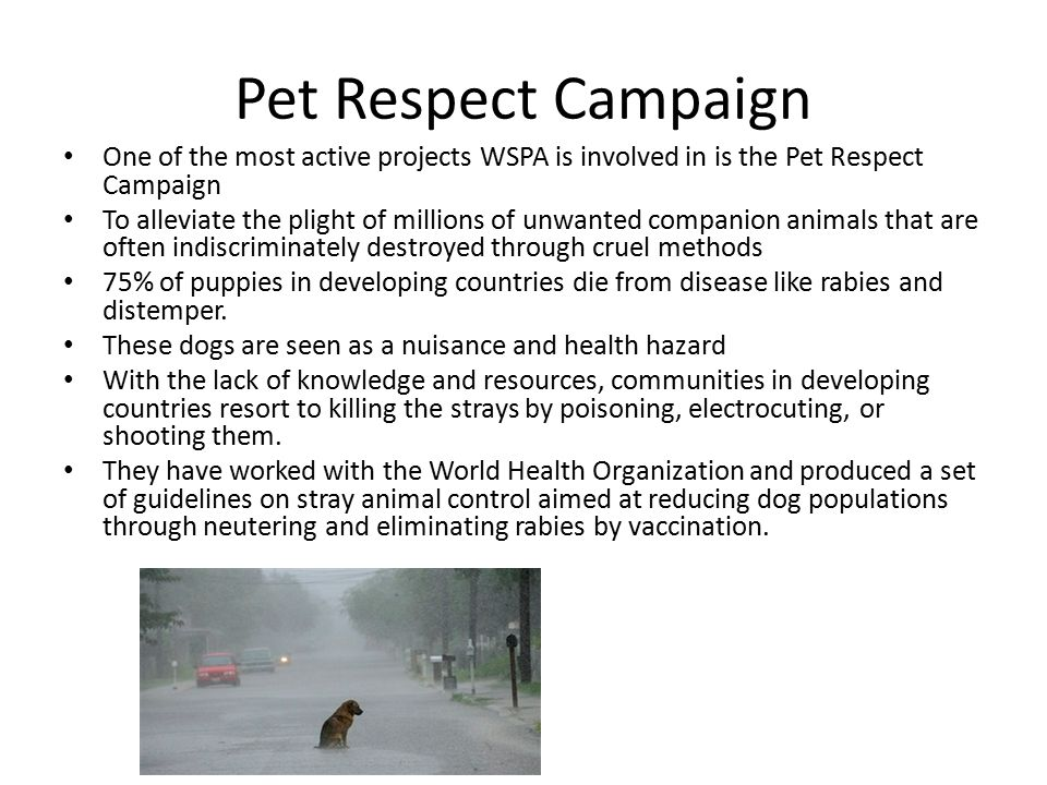 Pet Respect Campaign One of the most active projects WSPA is involved in is the Pet Respect Campaign.