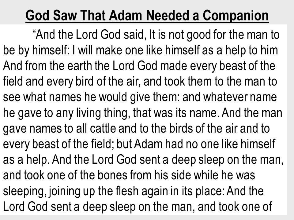 God Saw That Adam Needed a Companion