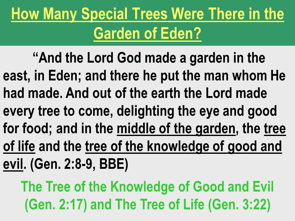 How Many Special Trees Were There in the Garden of Eden