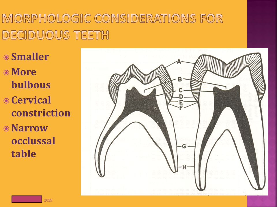MORPHOLOGIC CONSIDERATIONS FOR DECIDUOUS TEETH