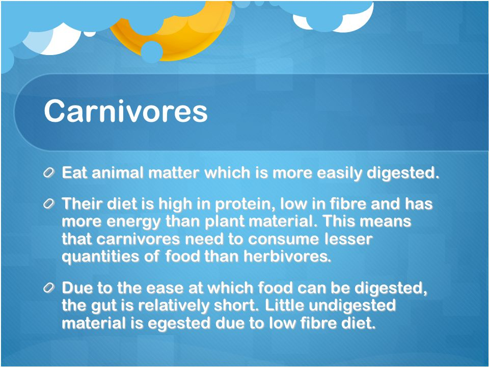 Carnivores Eat animal matter which is more easily digested.