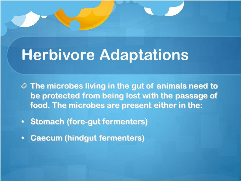 Herbivore Adaptations