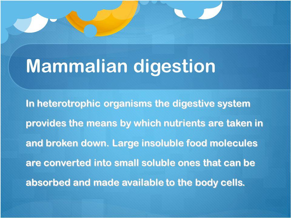 Mammalian digestion In heterotrophic organisms the digestive system