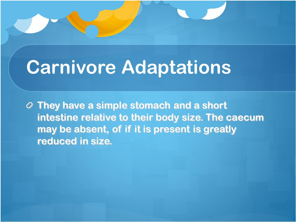 Carnivore Adaptations