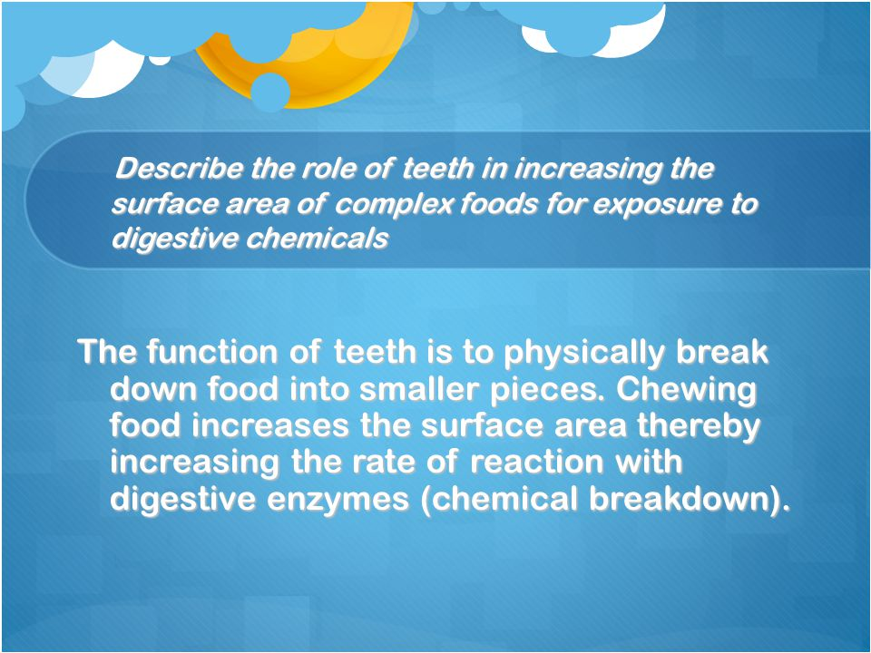 Describe the role of teeth in increasing the surface area of complex foods for exposure to digestive chemicals